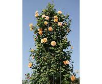Garden King Opora pro pnoucí rostliny 188 x 40 cm