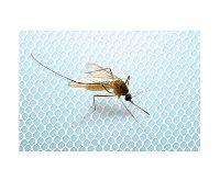 HomeLife Okenní síť proti hmyzu 130x150cm, bílá
